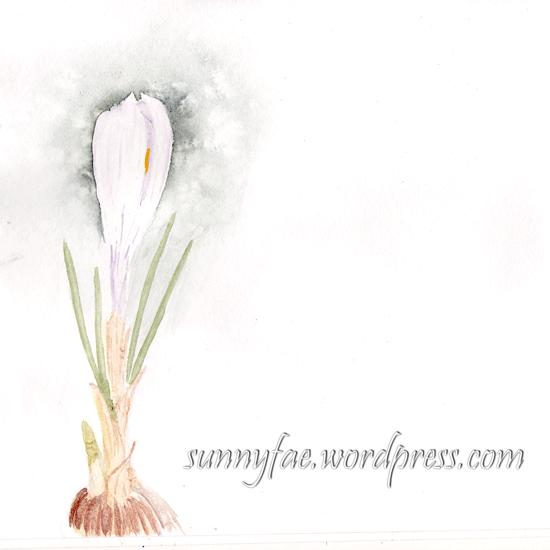 white crocus watercolour