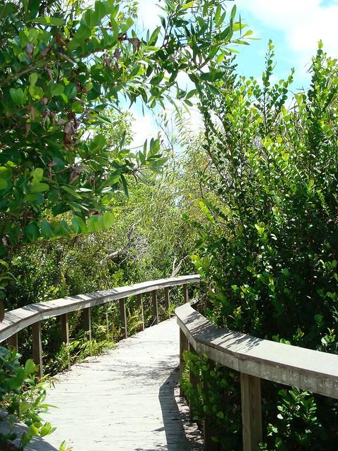Bobcat Boardwalk