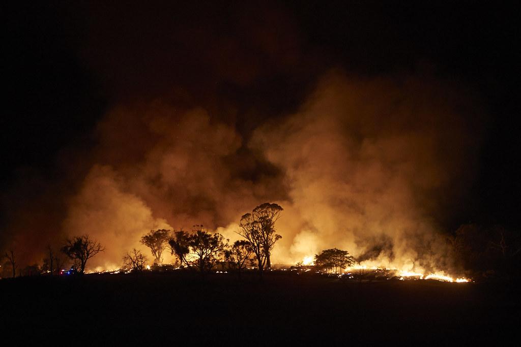 澳洲新南威爾斯省野火。圖片提供:綠色和平