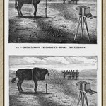 Sat, 1881-09-24 11:44 - Photography had now been around for nearly 40 years and many innovations had been made in that time In 1839 image exposures could take upwards of 3 minutes. The latest in 1881 was instantaneous photography. No more timed exposures you could get your shot with the click of a shutter. To demonstrate this a 'worthless mule' was used. Upon the animals forehead a cotton bag was tied containing 6 ounces of dynamite. The shutter on the camera was wired to simultaneously go off with the explosion. After the explosion the picture they saw was a headless mule. Its head blown clean off and still standing. Instantaneous! The now truly worthless mule hadn't even had a chance to fall ! This was a remarkable advancement in photography. Not so much for the mule.  Scientific American magazine September 24th 1881.