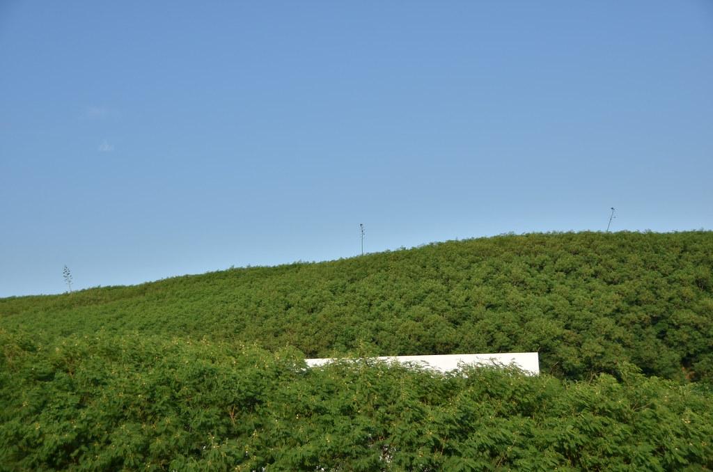 整山的銀合歡林。圖片提供:國立台灣師範大學