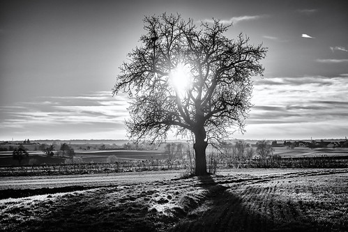 anlässe bäume em5iii felder fototour gegenlicht himmel landschaft mzuiko124028 natur omd olympus pflanzen sonne sonnenuntergang weg wolken bw clouds fields landscape miraclesofcreation monochrome nature sw savingtheclimatebytrees sky sun sunset trees way altenriet badenwürttemberg deutschland
