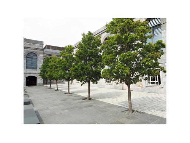 trees (row of)