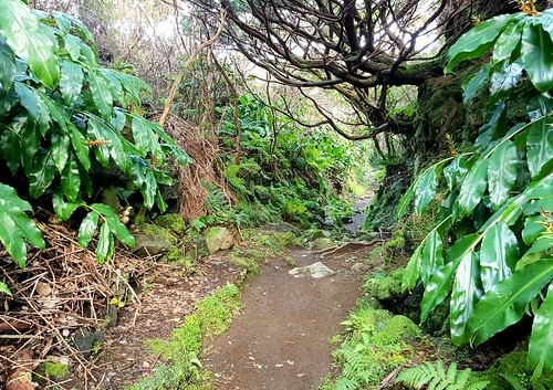 Old Oxcart Trail to the Collapsed Five Peak Volcano &  Caldeira de Guilherm Moniz /  Passagem das Bestas / PRC07TER / TERCEIRA / AZORES / circular / Hike 4 - Series 6 2020  / 5 star hike, relatively easy.   Geosite & protected area of Caldeira de Guilherm | by Chris Belsten