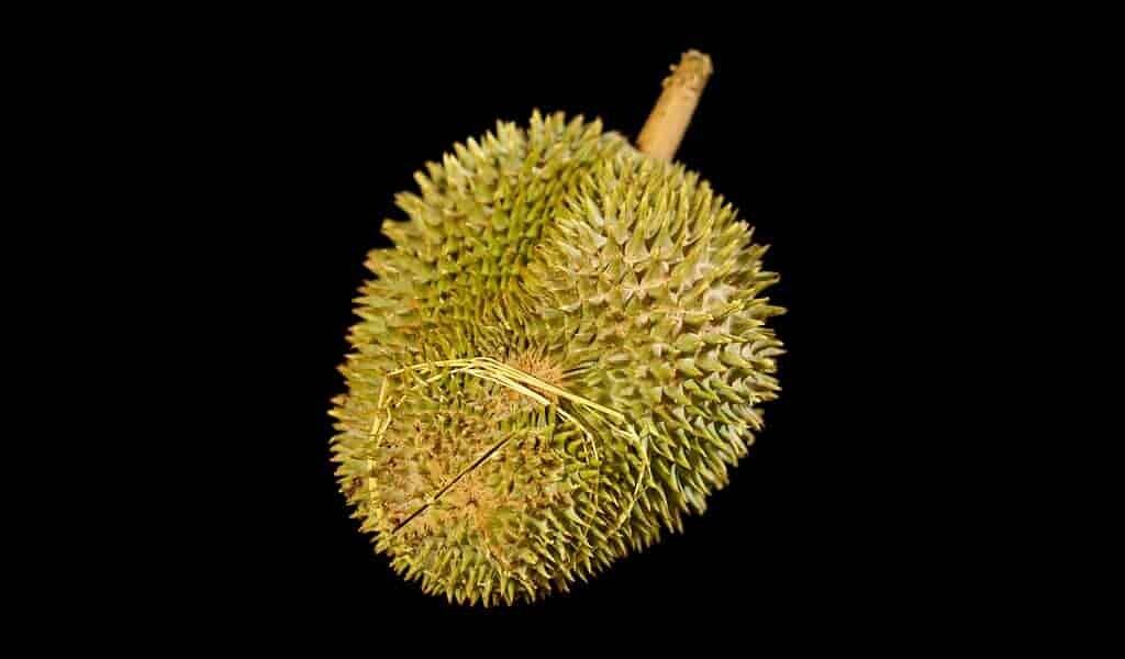utiliser-le-durians-pour-faire-des-chargeurs-électriques-super-rapides