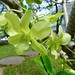 D13 Orchids at Villa Romonea