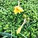 Surprise spring. 55/366