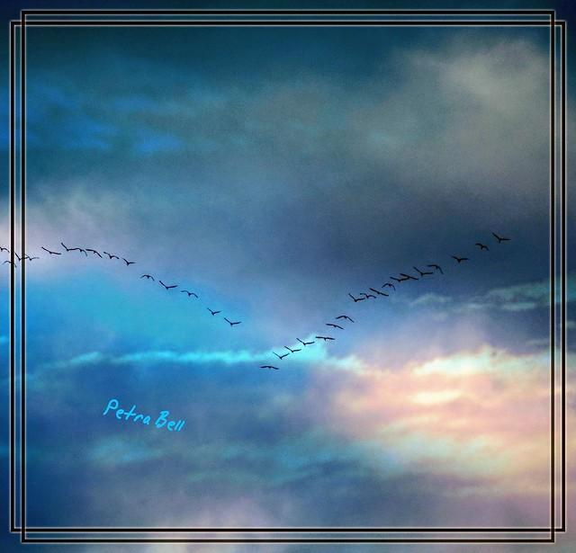 The return of migratory birds 💖