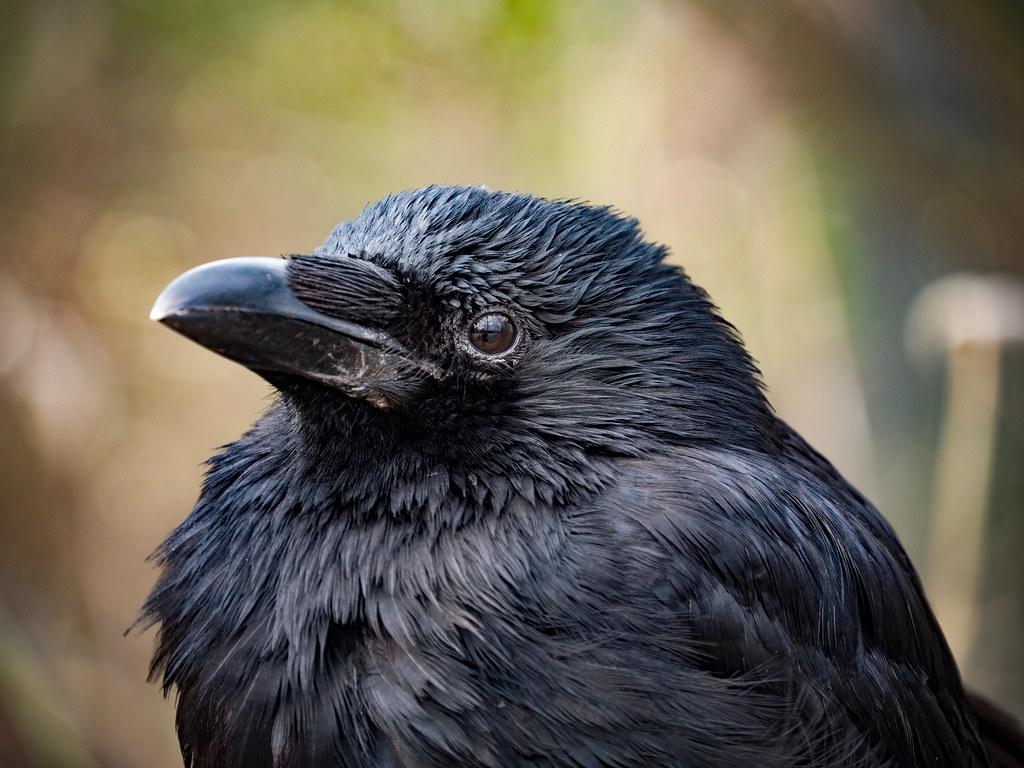 Dans l'œil du corbeau... 49584571968_e453cff8a3_b