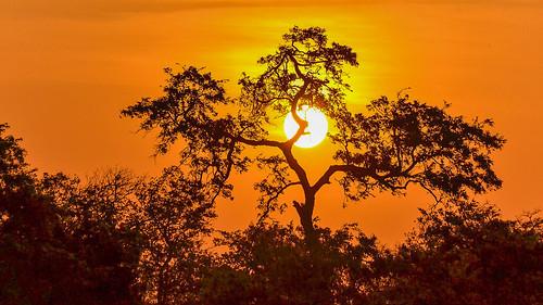 pretoria gauteng southafrica krugernationalpark sunset
