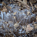 Ice crystals on the hiking trail
