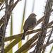 Bosque Birding - Feb.16,30