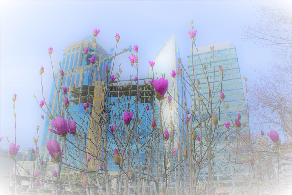 20200225_flowers_in_uptown