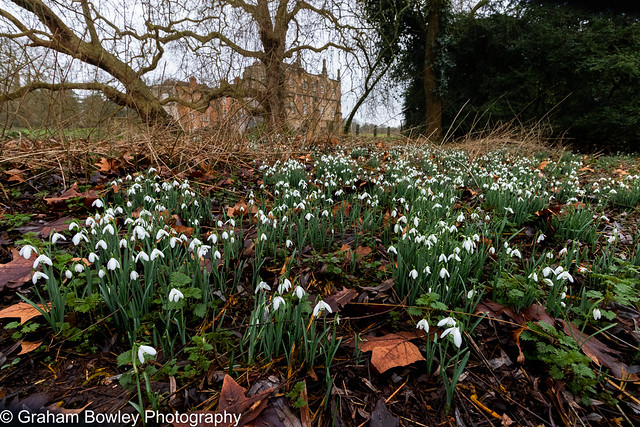 Snowdrops at the Abbey