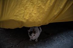 Bottom cat