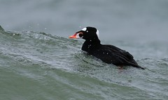 Surfing Lake Ontario  (由  Slow Turning