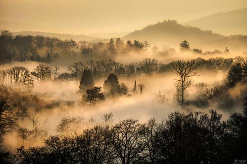 mindblowing fog crows landscape sunrise morning silhouette forrest a6000 ilce6000 sel55210 schönegg bern switzerland lewelsch lewelschphoto swissphotographers