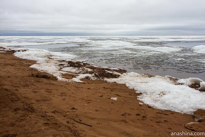 Берег Финского залива в Комарово