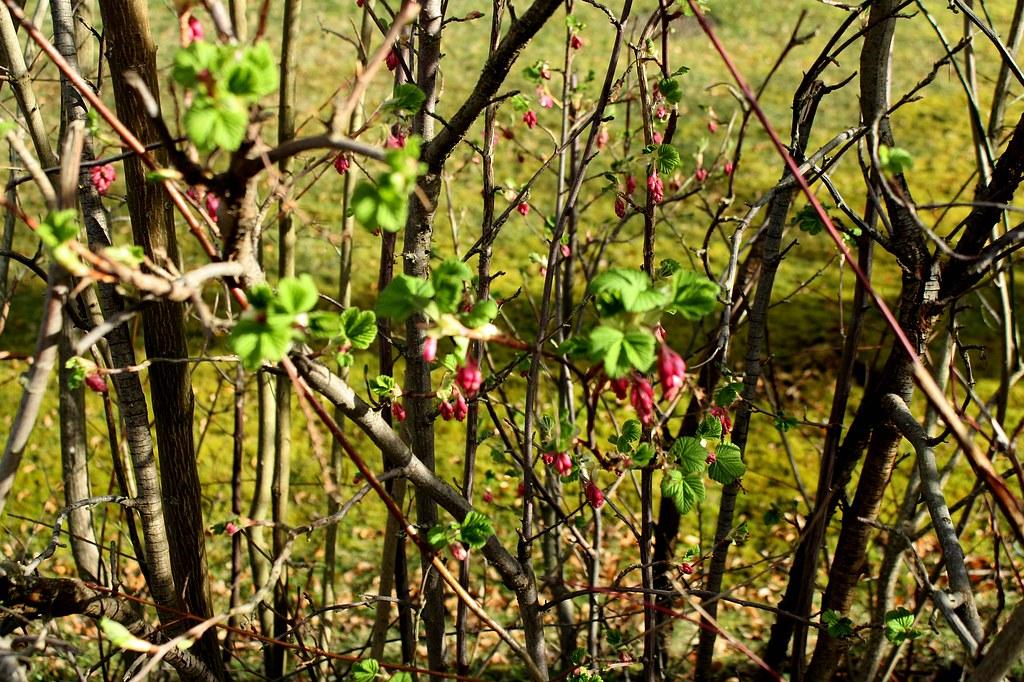 Frühling IMG_1627