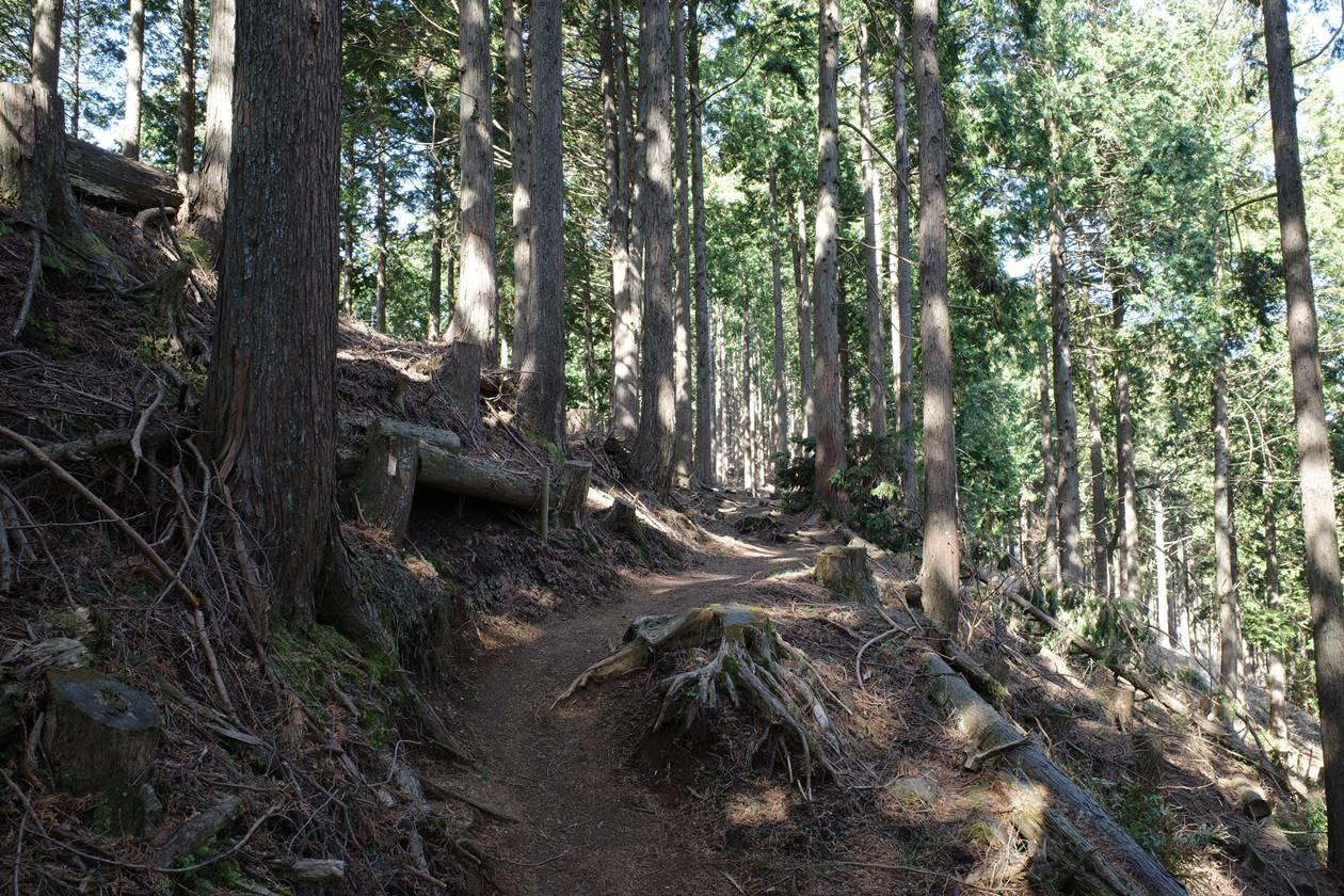 高松山の登山道