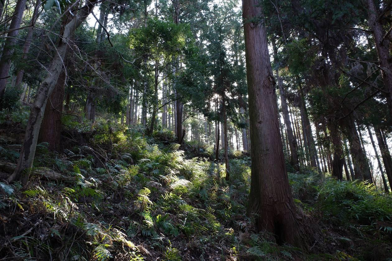 松田山~高松山 登山道の森