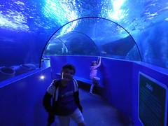Weymouth 2019 - 067 SEA LIFE Centre Adventure Park
