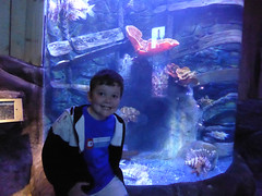 Weymouth 2019 - 016 SEA LIFE Centre Adventure Park