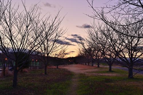 sunset goldenhour dusk trees silhouette trail nature landscape symmetry branches sky clouds