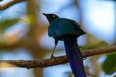 Birds of West Africa 2020