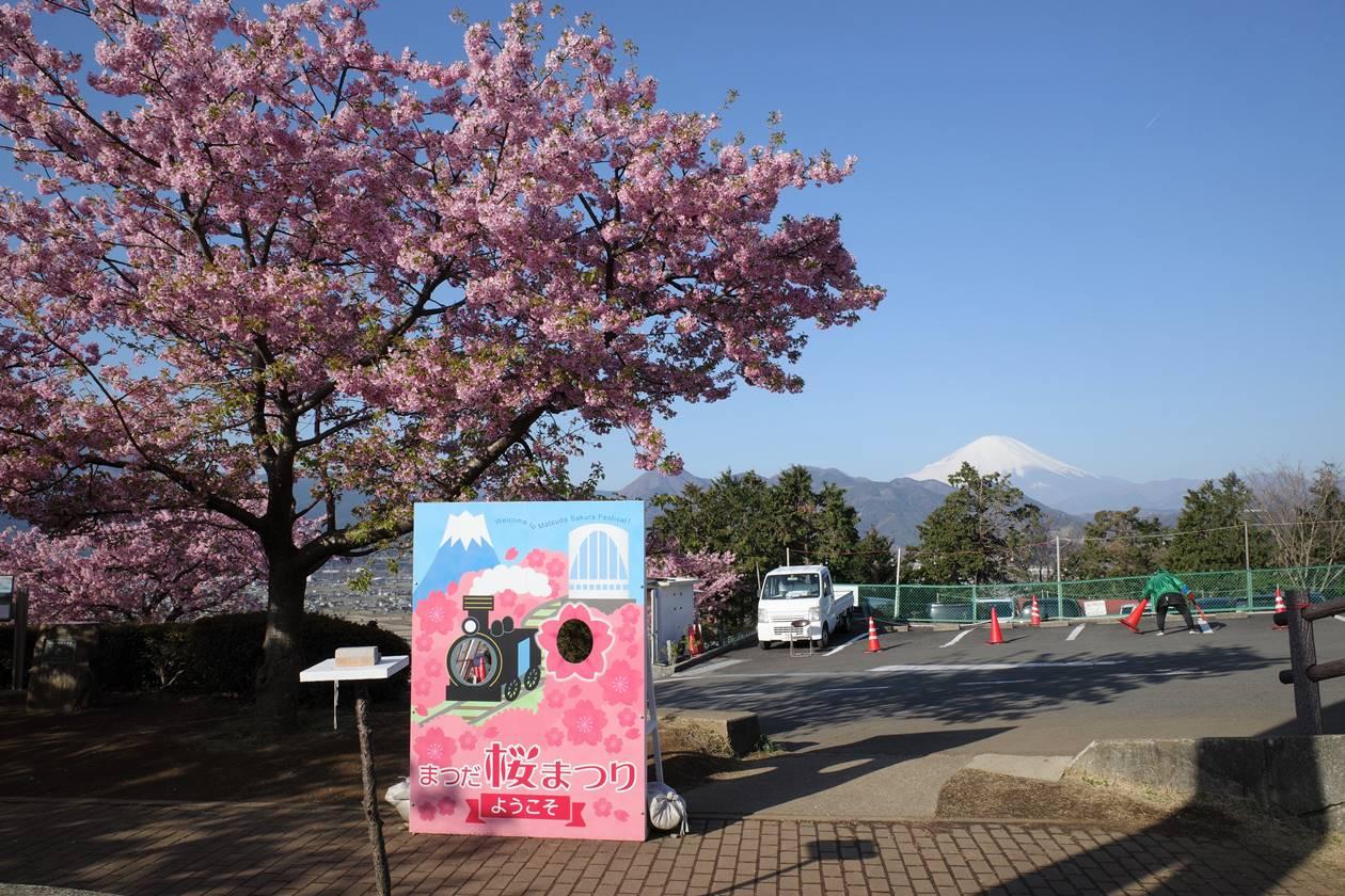 松田山 まつだ桜まつり