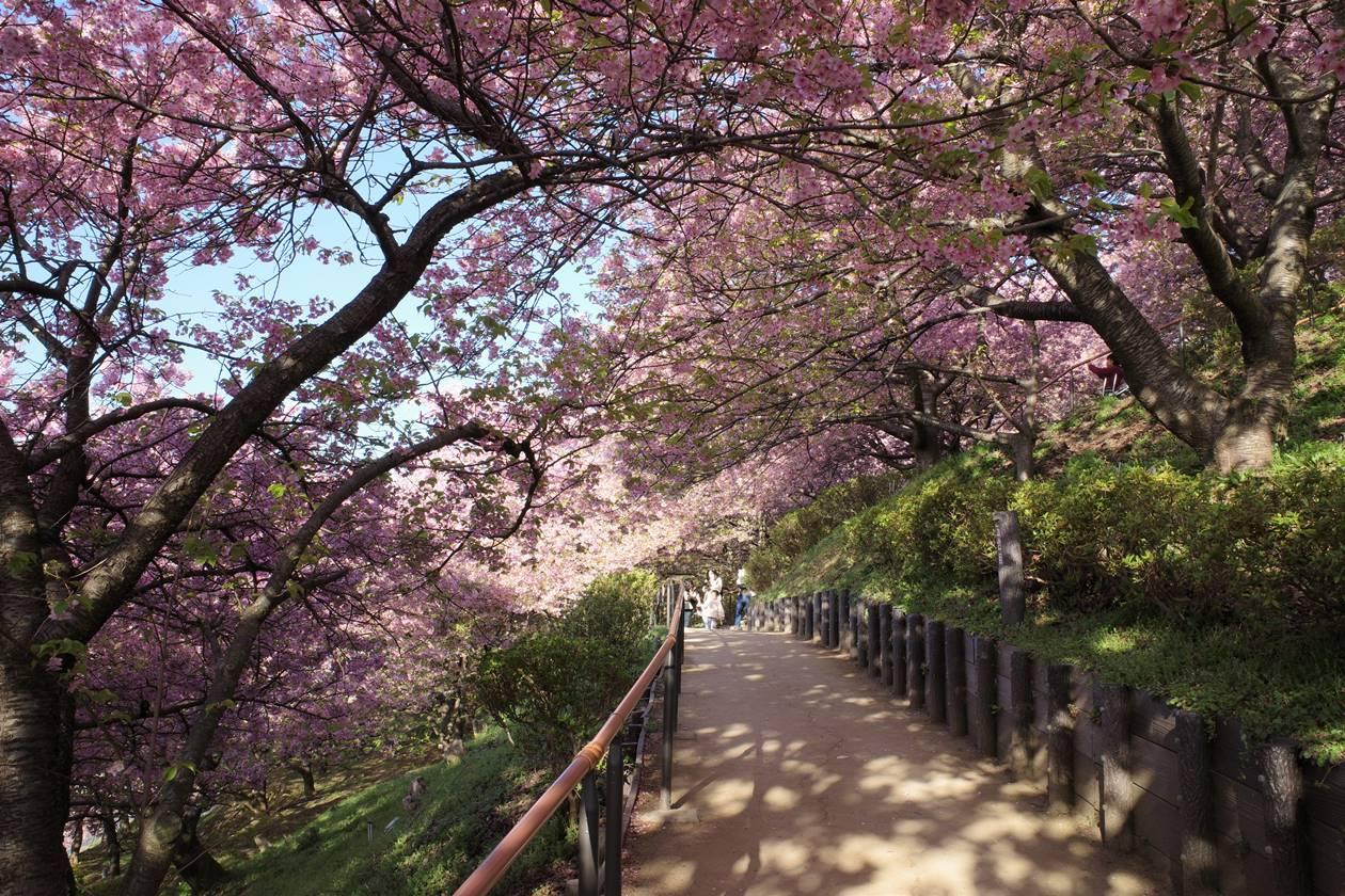 まつだ桜まつり公園内の散策路