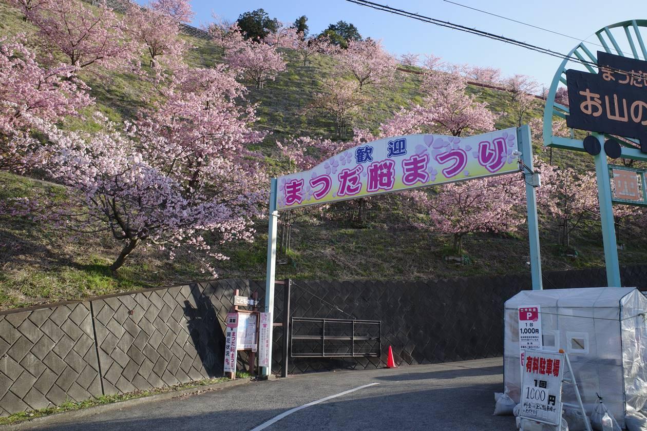まつだ桜まつり入口