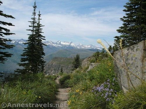 Trees begin to obscure the view along the Highline Trail after Haystack Pass, Glacier National Park, Montana