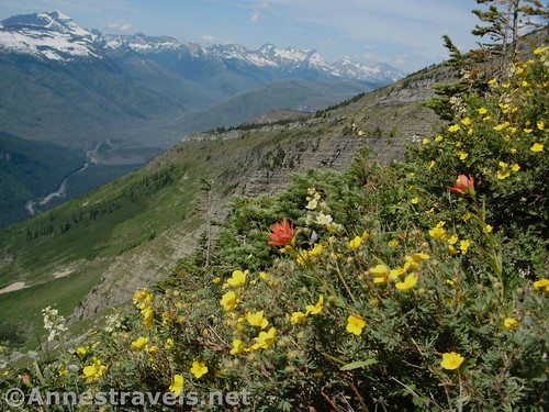 Paintbrush and buttercups along the Highline Trail, Glacier National Park, Montana