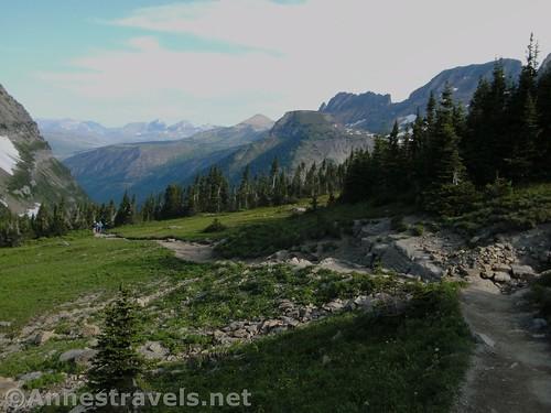Meadows near the Highline Trailhead, Glacier National Park, Montana