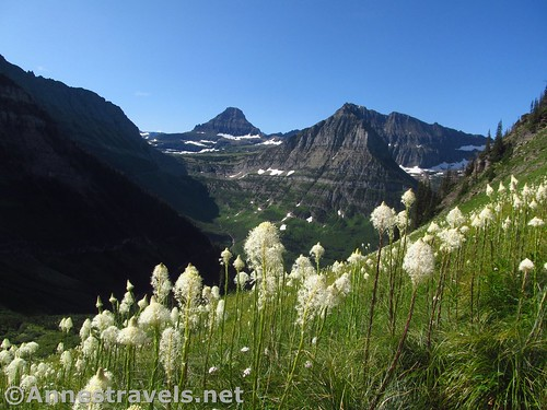 Beargrass below Haystack Pass along the Highline Trail, Glacier National Park, Montana