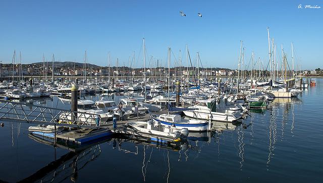 Gulls on the sailing ships. Gaviotas sobre los veleros