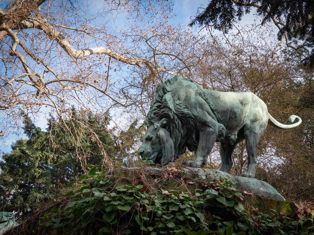 Les lions du Jardin des Plantes... 49589104603_2be4519050_b