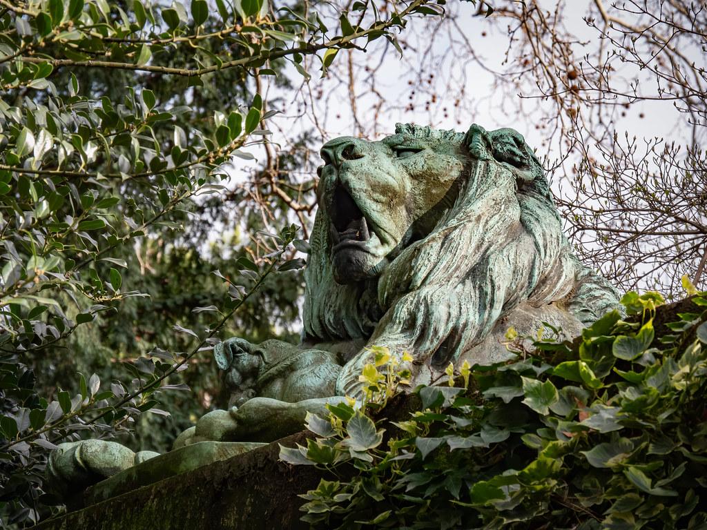 Les lions du Jardin des Plantes... 49589115018_c355cf04c7_b