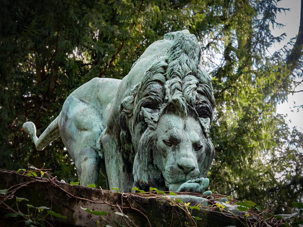 Les lions du Jardin des Plantes... 49589123103_326c91fe8d_b