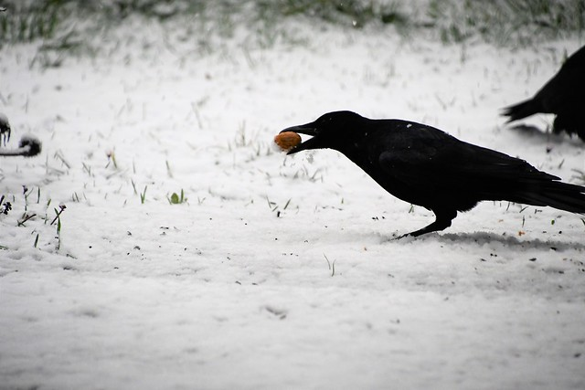 Crows 26.02 (1)