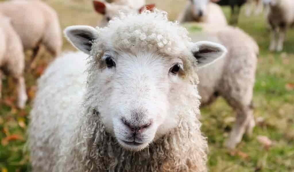 un-capteur-des-signes-vitaux-pour-les-animaux-à-fourrure