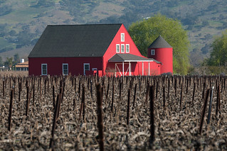 Napa Valley | 2020 | by wikiphotographer