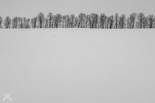 2202 blackwhite canon craftsburyoutdoorcenter craftsburyvt highcontrast snow vt vacation vermont winter landscape skiing trees