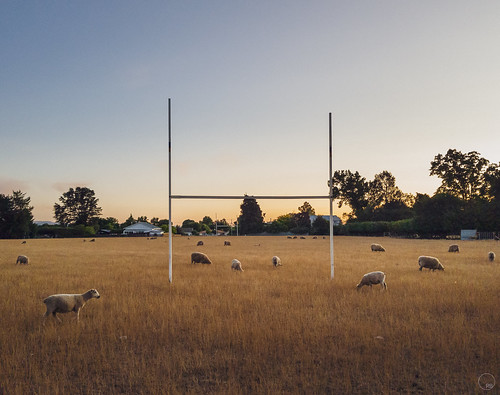 newzealand samsungnote8 sheep kiwiana rugy field rugby masterton wairarapa sunset rural life country smalltown mobilephonephotography cell phone photography landscape lightroom