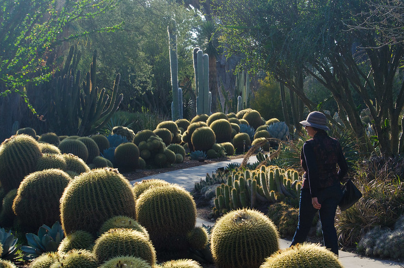 The cacti walk