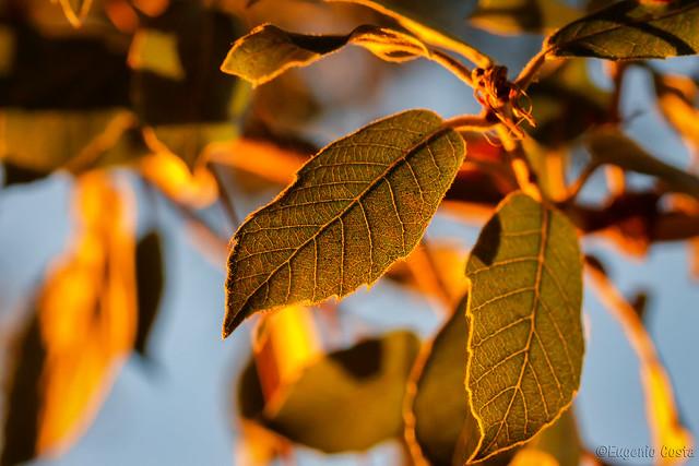Le foglie guardano il sole. - The leaves look at the sun.