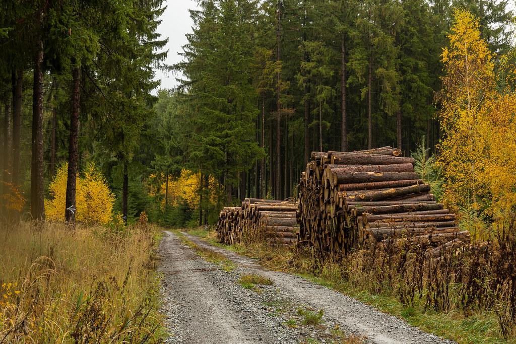 Unser Wald  (34)