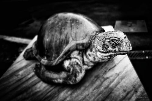 River Garden Turtle