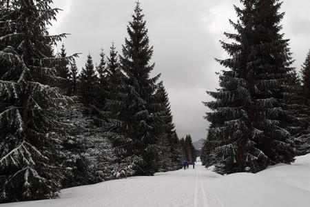 Zima se vrací, na horách připadlo od 5 do 15 cm nového sněhu